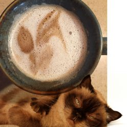 A Coffee Cat